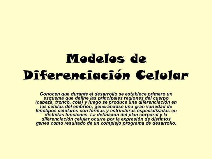 Modelos de Diferenciación Celular Conocen que durante el desarrollo se establece primero un esquema que define las princip...