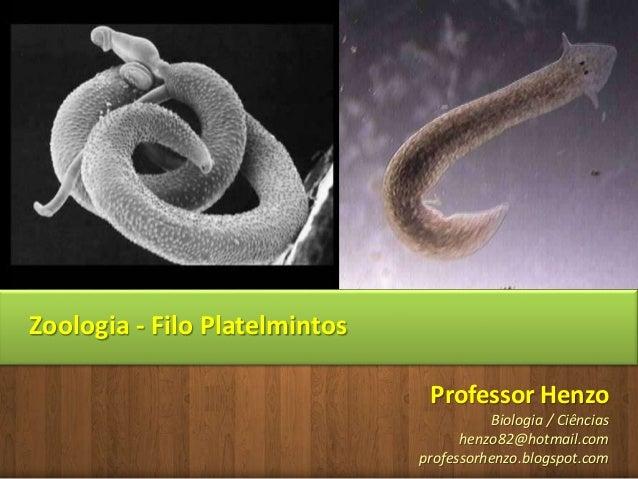 Professor Henzo Biologia / Ciências henzo82@hotmail.com professorhenzo.blogspot.com Zoologia - Filo Platelmintos