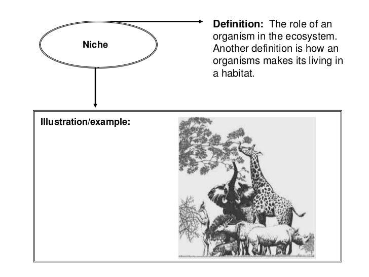 Vocabulary Book: Ecosystems