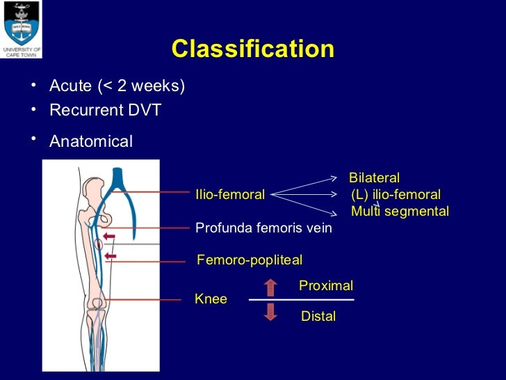 deep vein thrombosis research papers Read the latest articles of thrombosis research at  papers and abstracts of the 5th international conference on thrombosis and  of deep vein thrombosis in.