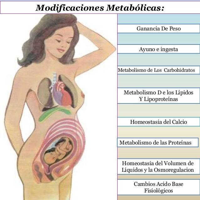 Modificaciones metabólicas y endocrinas en el embarazo . Slide 2