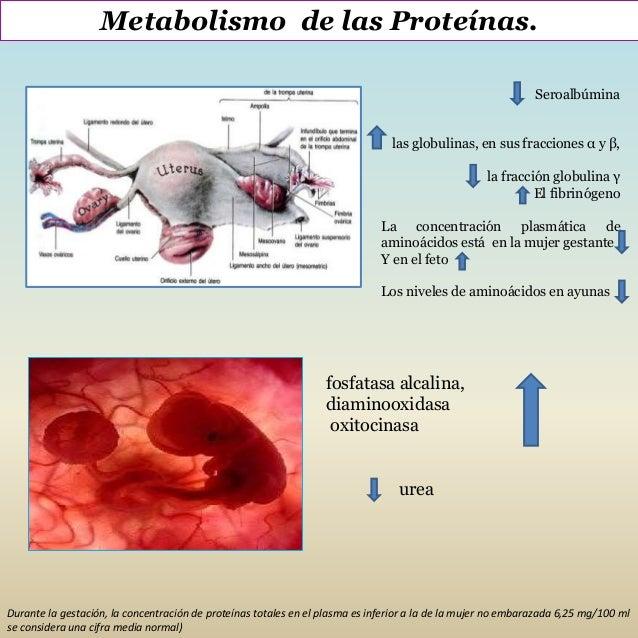 Modificaciones metabólicas y endocrinas en el embarazo