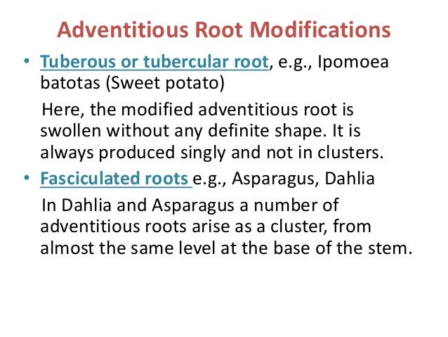 Modifications of roots