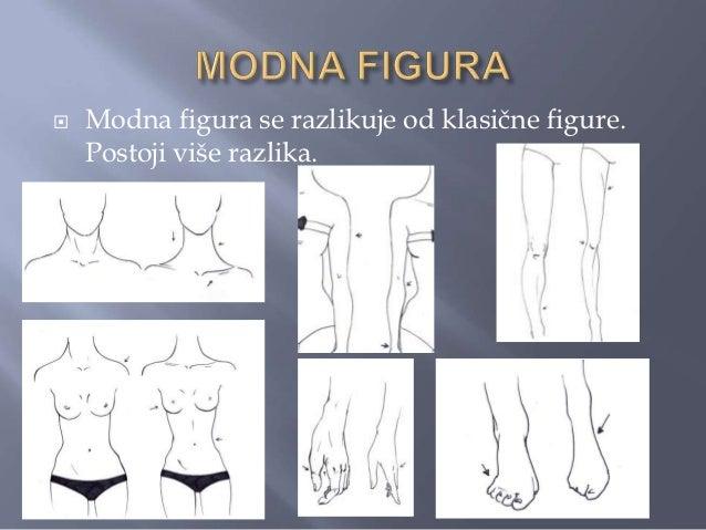    Prva i najveća je u visini figure. Osnovna    modna figura ima 8,5 glava.   Broj glava u modnoj figuri moţe biti i ve...