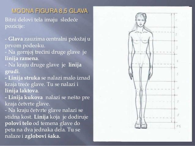    Kod modne figure u statičnom i simetričnom    uspravnom poloţaju vertikalna ravnotežna linija ide    sredinom tela od ...