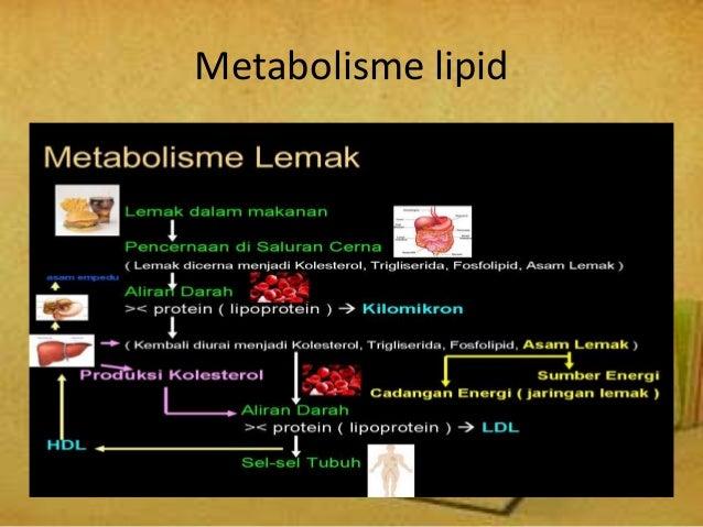 Analisis Metabolisme Nutrisi Berkaitan Dengan Gizi Lebih dan Obesitas