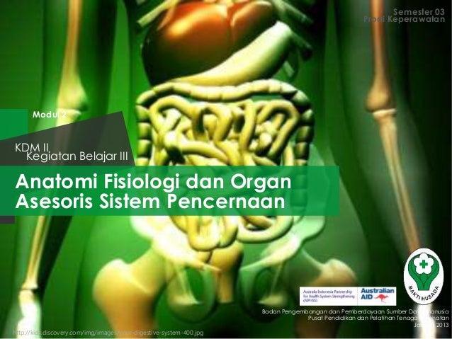 Anatomi Fisiologi dan Organ Asesoris Sistem Pencernaan Semester 03 Kegiatan Belajar III KDM II Badan Pengembangan dan Pemb...