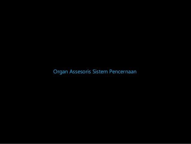 Organ Assesoris Sistem Pencernaan