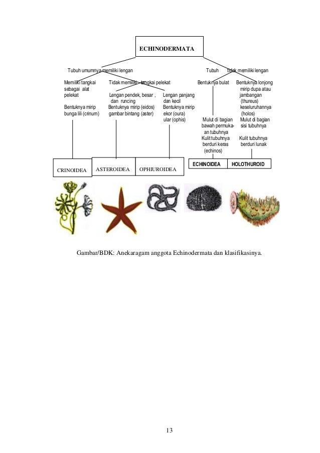 Modul 3 Keanekaragaman Hewan
