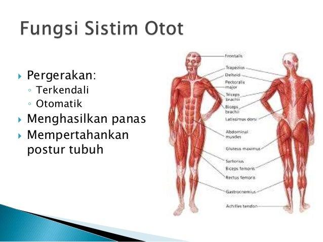 Modul 5 Anatomi Dasar Dan Fisiologi Sistim Organ Tubuh Manusia