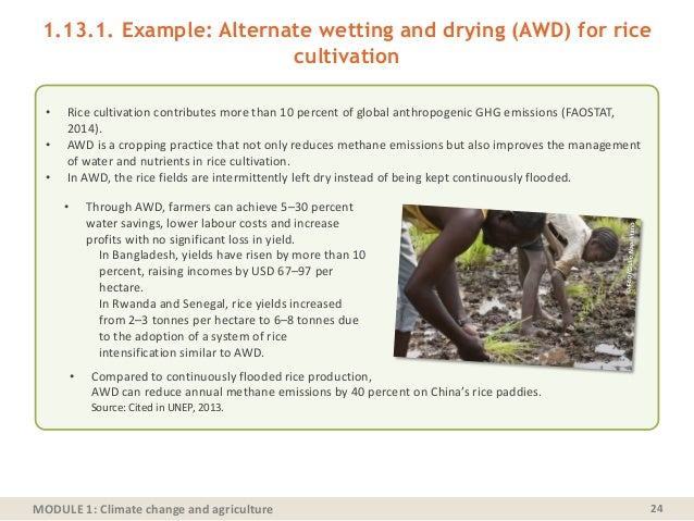 MODULE 1: Climate change and agriculture 1.13.1. Example: Alternate wetting and drying (AWD) for rice cultivation 24 • Ric...