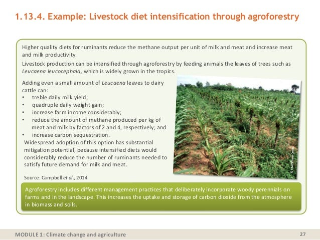 MODULE 1: Climate change and agriculture 27 Higher quality diets for ruminants reduce the methane output per unit of milk ...