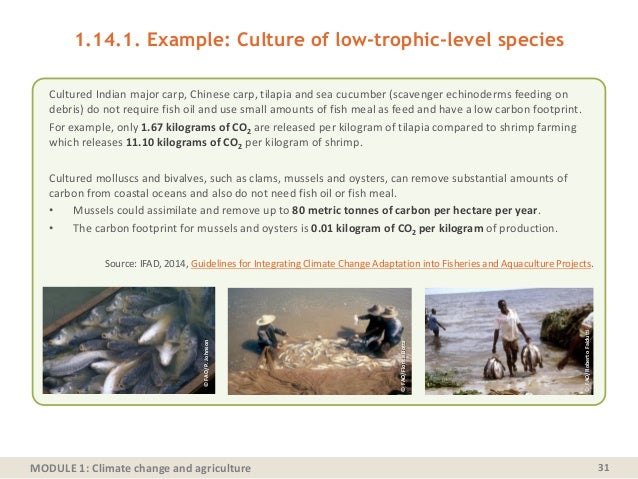 MODULE 1: Climate change and agriculture 1.14.1. Example: Culture of low-trophic-level species Cultured Indian major carp,...