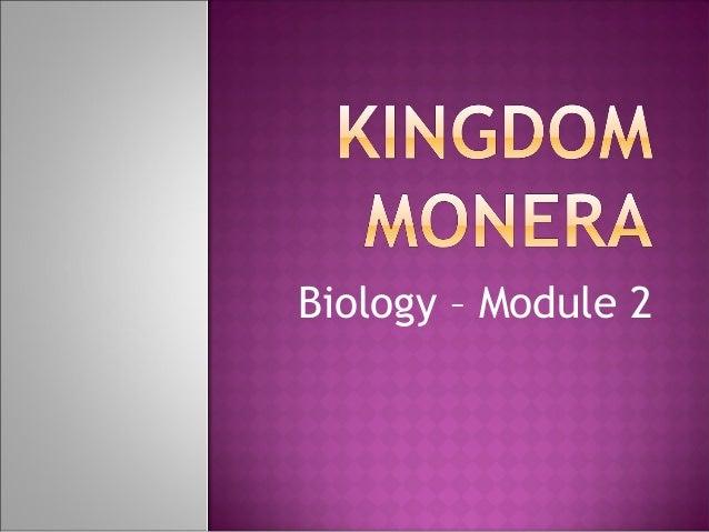 a single celled organism belonging to kingdom monera