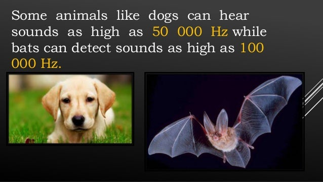 Sounds Only Dogs Can Hear App