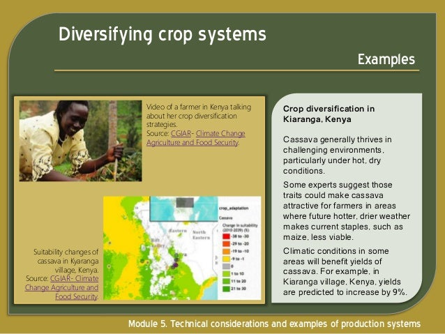 Economic Factors Affecting Diversified Farming Systems