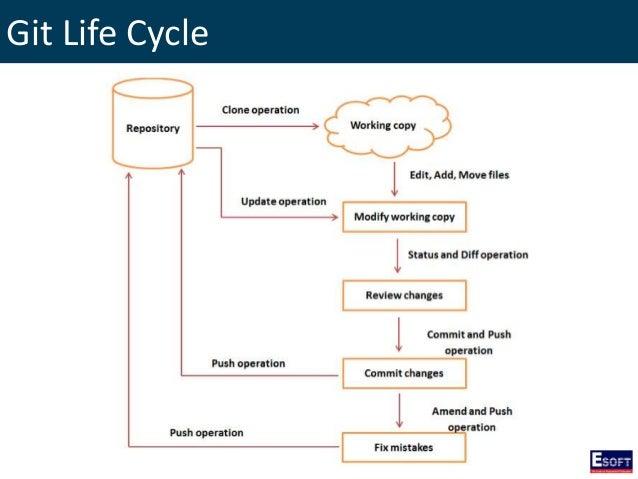 Web Branching Diagram Wiring Diagram Services