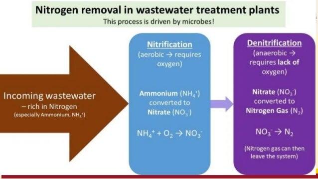 The microbes Autotrophic. Heterotrophic. Precursor Ammonium . Nitrate. End product Nitrate. Nitrogen. pH and Temperature T...