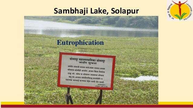 Sambhaji Lake, Solapur Eutrophication
