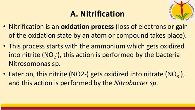 A. Nitrification • Nitrification is an oxidation process (loss of electrons or gain of the oxidation state by an atom or c...