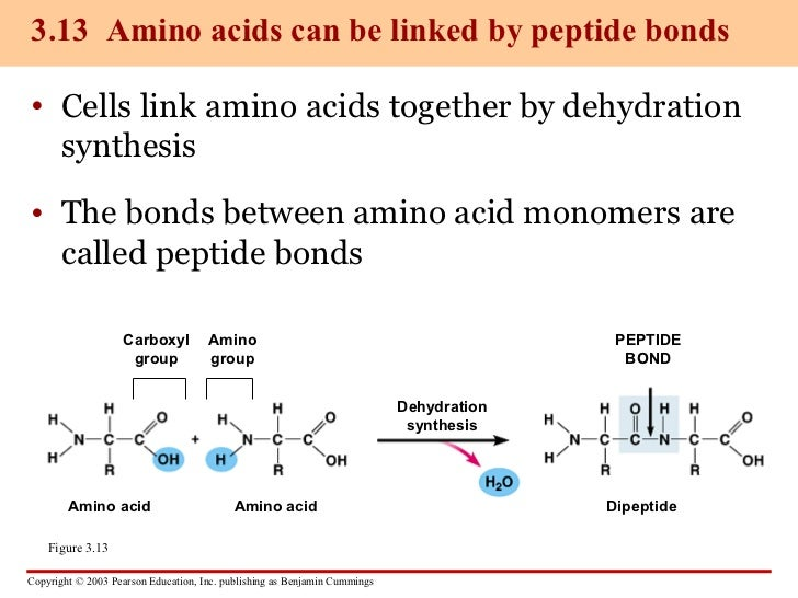 protein and nucleic acid relationship quotes