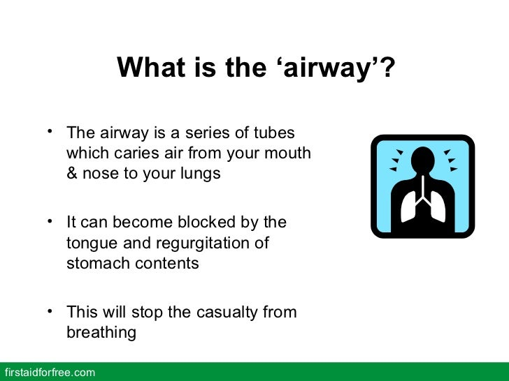 What is the 'airway'? <ul><li>The airway is a series of tubes which caries air from your mouth & nose to your lungs </li><...