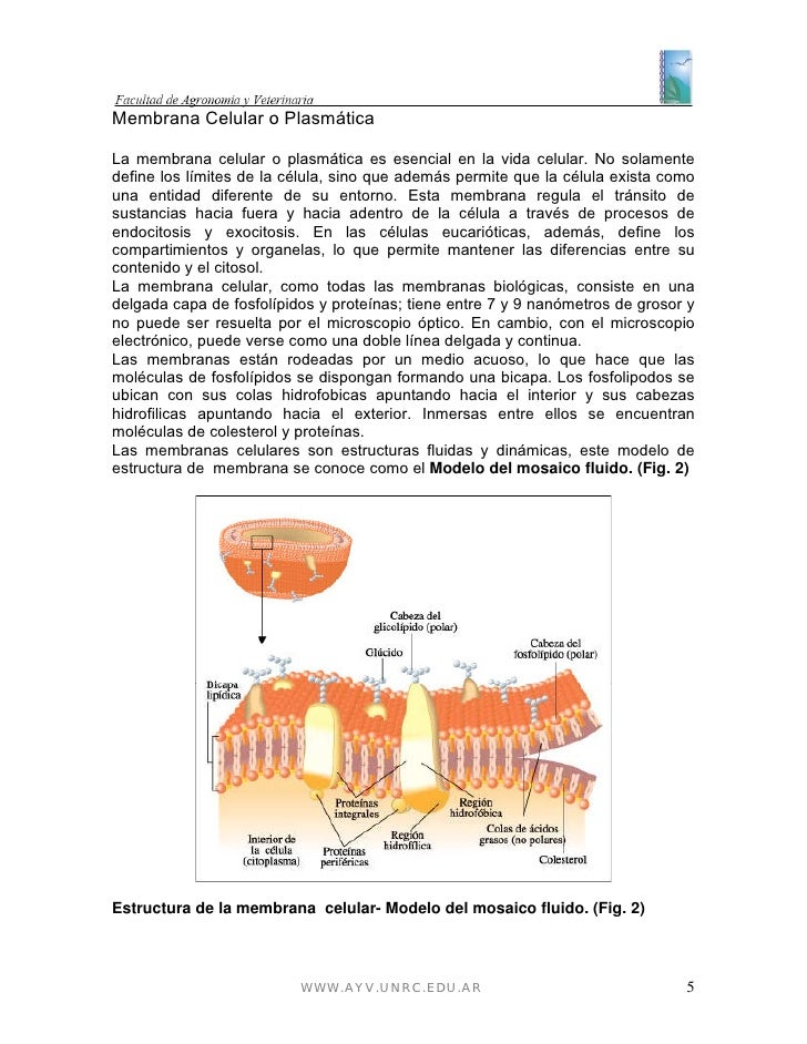 Modulo biologia veterinaria - Estructuras libros vivos ...