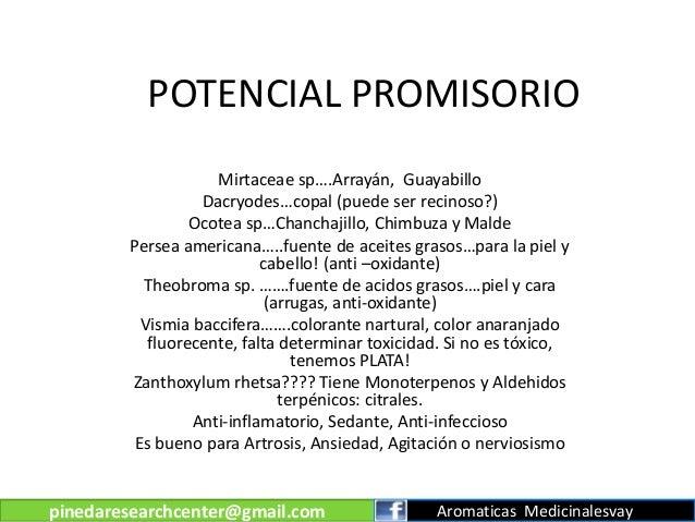 POTENCIAL PROMISORIO Mirtaceae sp….Arrayán, Guayabillo Dacryodes…copal (puede ser recinoso?) Ocotea sp…Chanchajillo, Chimb...
