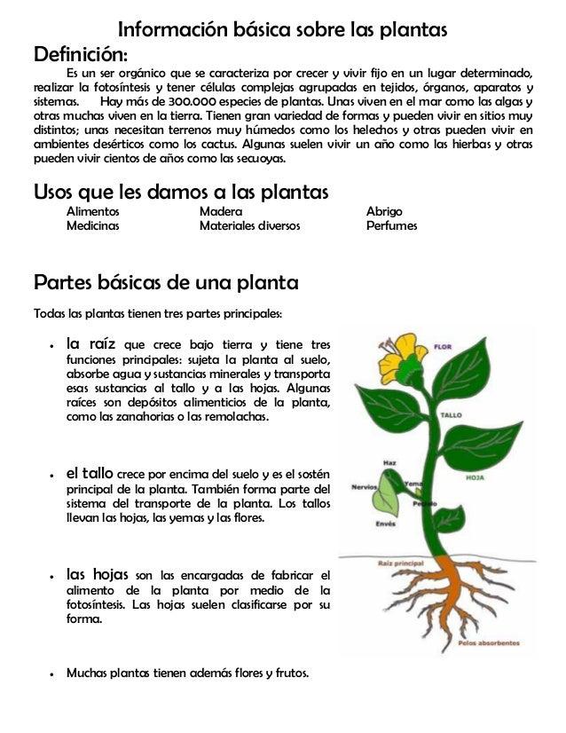 Modulo 11 partes de la planta - Cosas sobre las plantas ...