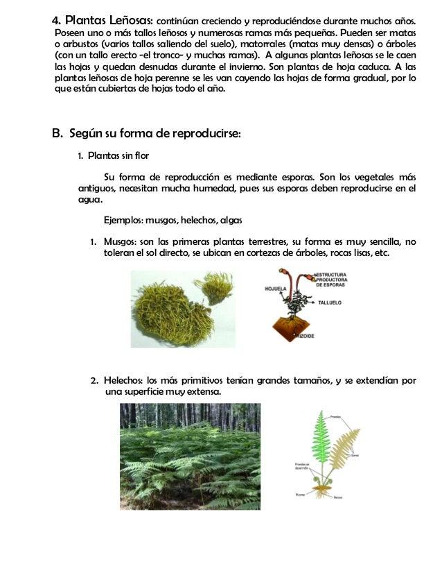Modulo 11 partes de la planta for Como se llaman los arboles que no pierden sus hojas