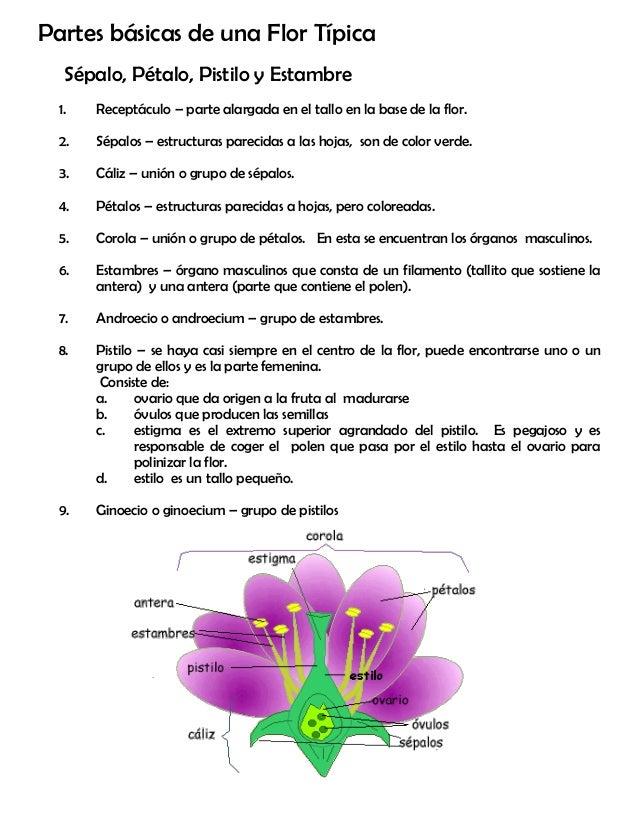Modulo 3 la flor