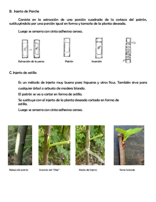 Modulo 5 injertos for Incompatibilidad en plantas