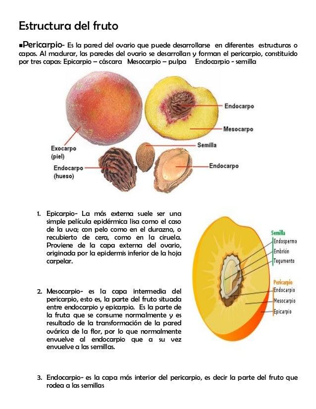 Modulo 9 los frutos