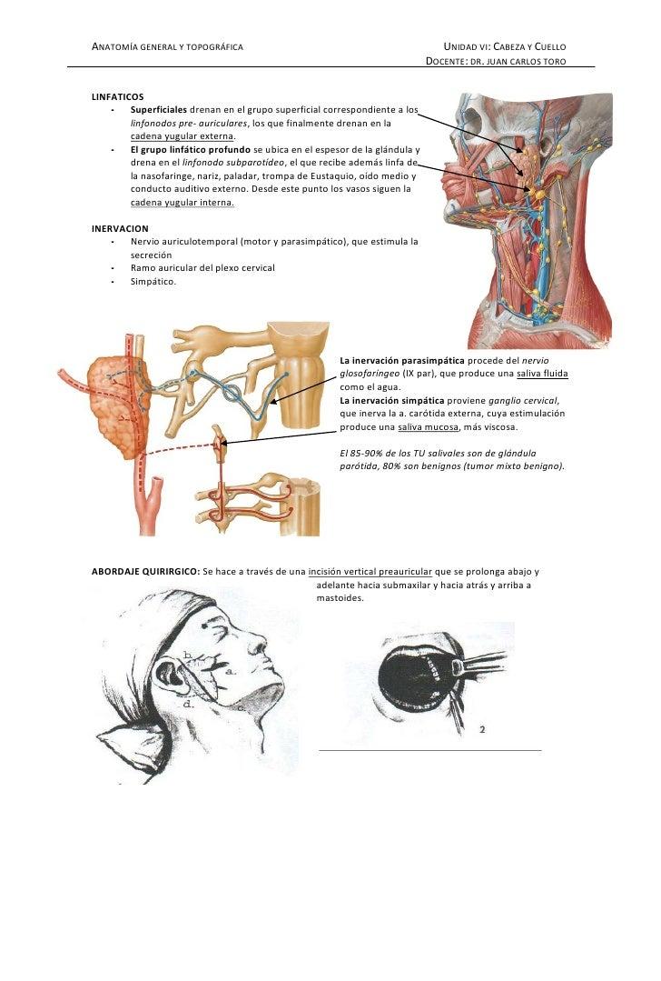 Modulo cabeza y_cuello