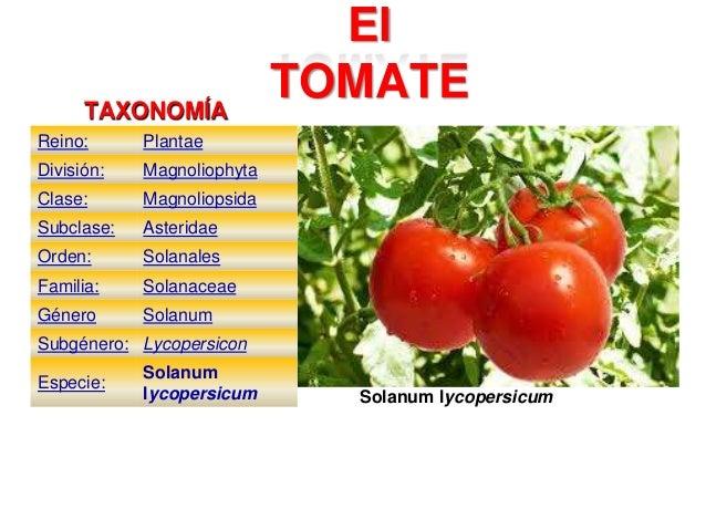 Descripción Botánica De Los Cultivos Tomate Pimentón