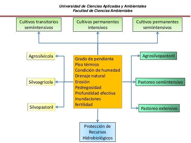 Universidad de Ciencias Aplicadas y Ambientales Facultad de Ciencias Ambientales Cultivos permanentes intensivos Cultivos ...