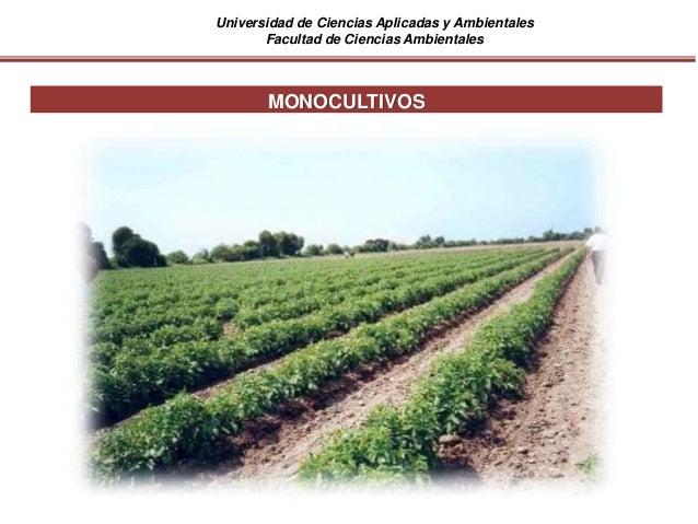Universidad de Ciencias Aplicadas y Ambientales Facultad de Ciencias Ambientales MONOCULTIVOS