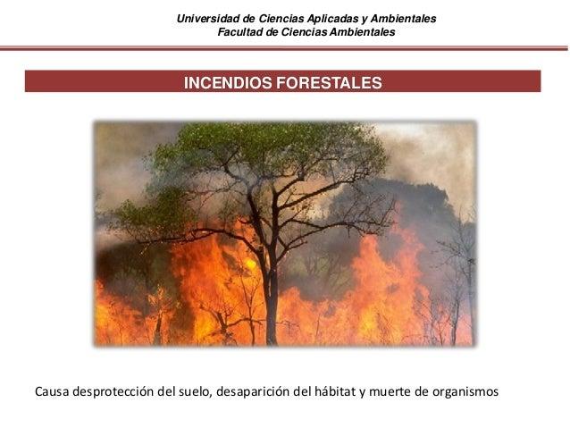 Universidad de Ciencias Aplicadas y Ambientales Facultad de Ciencias Ambientales INCENDIOS FORESTALES Causa desprotección ...