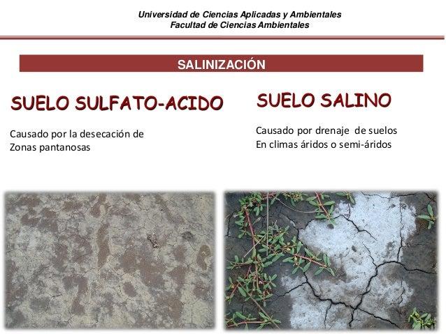 Universidad de Ciencias Aplicadas y Ambientales Facultad de Ciencias Ambientales SALINIZACIÓN SUELO SULFATO-ACIDO Causado ...