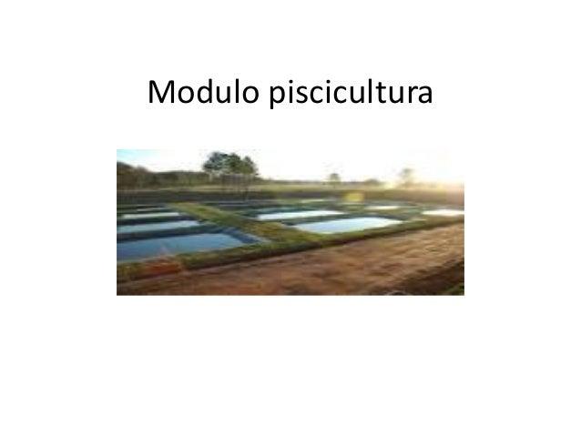 Modulo piscicultura