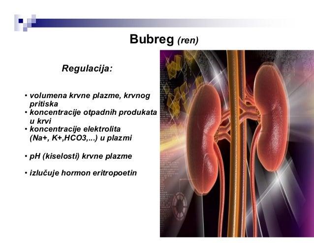 Građa bubrega: 1. Malpigijeva piramida , 2. Interlobularne arterije, 3. Bubrežna arterija, 4. Bubrežna vena, 5. Hilus, 6. ...