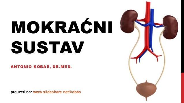 MOKRAĆNI SUSTAV ANTONIO KOBAŠ, DR.MED. preuzeti na: www.slideshare.net/kobas