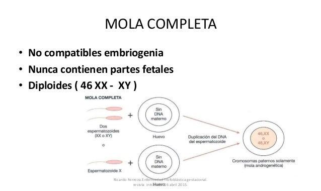 MOLA COMPLETA • No compatibles embriogenia • Nunca contienen partes fetales • Diploides ( 46 XX - XY ) Ricardo Ferreira.En...