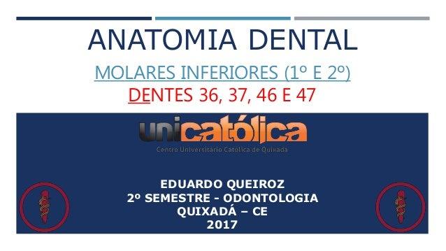 ANATOMIA DENTAL MOLARES INFERIORES (1º E 2º) DENTES 36, 37, 46 E 47 EDUARDO QUEIROZ 2º SEMESTRE - ODONTOLOGIA QUIXADÁ – CE...