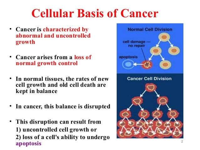 Ppt molecular and cellular biology of cancer powerpoint.