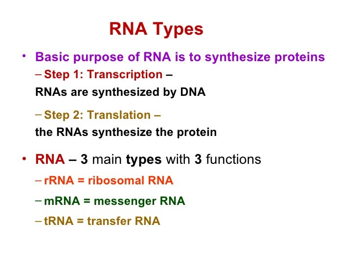 the purpose of protein synthesis