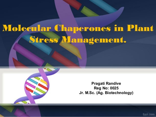 Molecular Chaperones in Plant Stress Management. Pragati Randive Reg No: 0025 Jr. M.Sc. (Ag. Biotechnology)