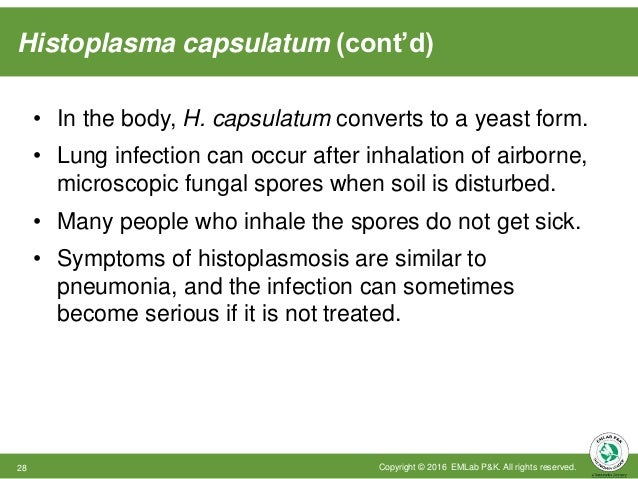 Histoplasma capsulatum (cont'd) Copyright © 2016 EMLab P&K. All rights reserved.28 • In the body, H. capsulatum converts t...