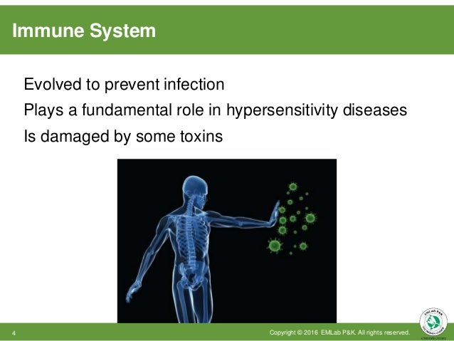 Immune System Evolved to prevent infection Plays a fundamental role in hypersensitivity diseases Is damaged by some toxins...