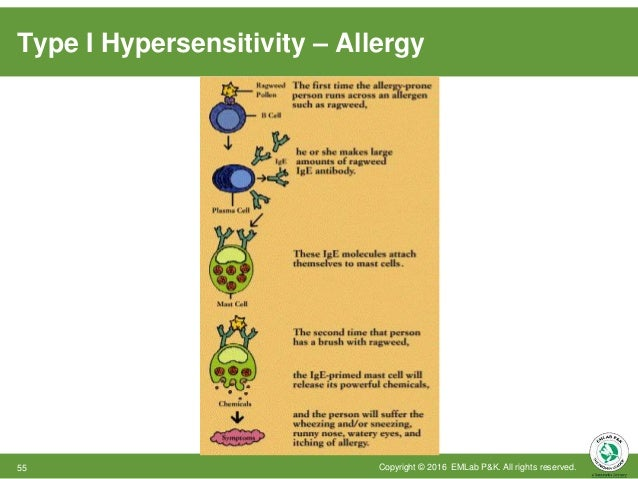 Type I Hypersensitivity – Allergy Copyright © 2016 EMLab P&K. All rights reserved.55